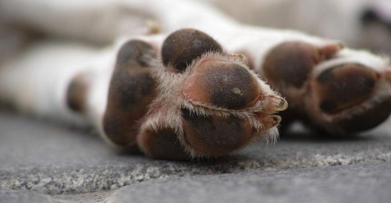 Утилизация трупов домашних животных